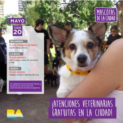 mascotas-de-la-ciudad-20-05-16