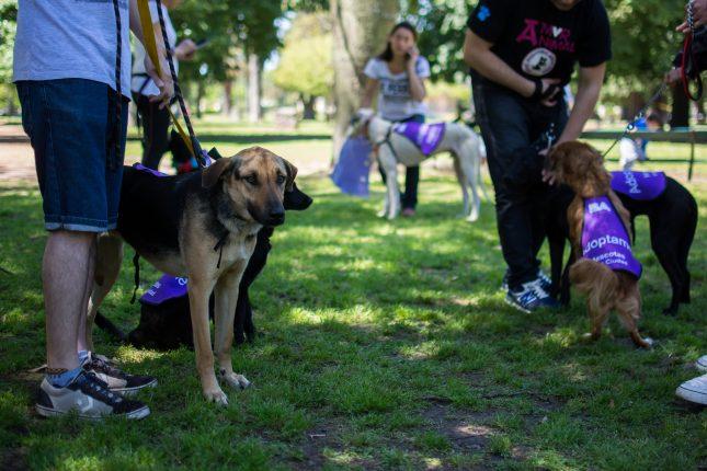 Jornada Adopción Mascotas