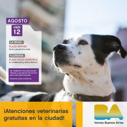 mascotas-de-la-ciudad-12-08-16